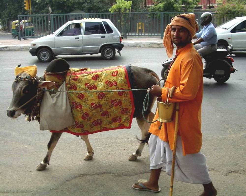 vache-sacre-inde