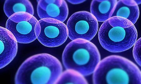 Conceptual cells