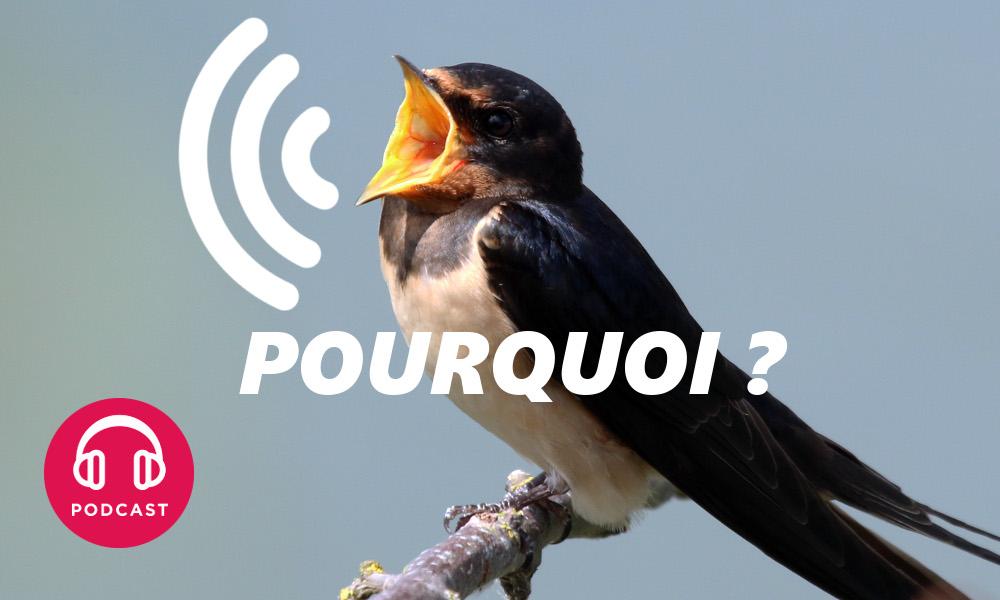 Pourquoi les oiseaux chantent ils davantage au printemps - Dessin oiseau qui chante ...