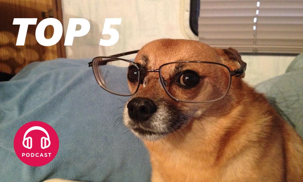 quels sont les 5 chiens les plus intelligents. Black Bedroom Furniture Sets. Home Design Ideas