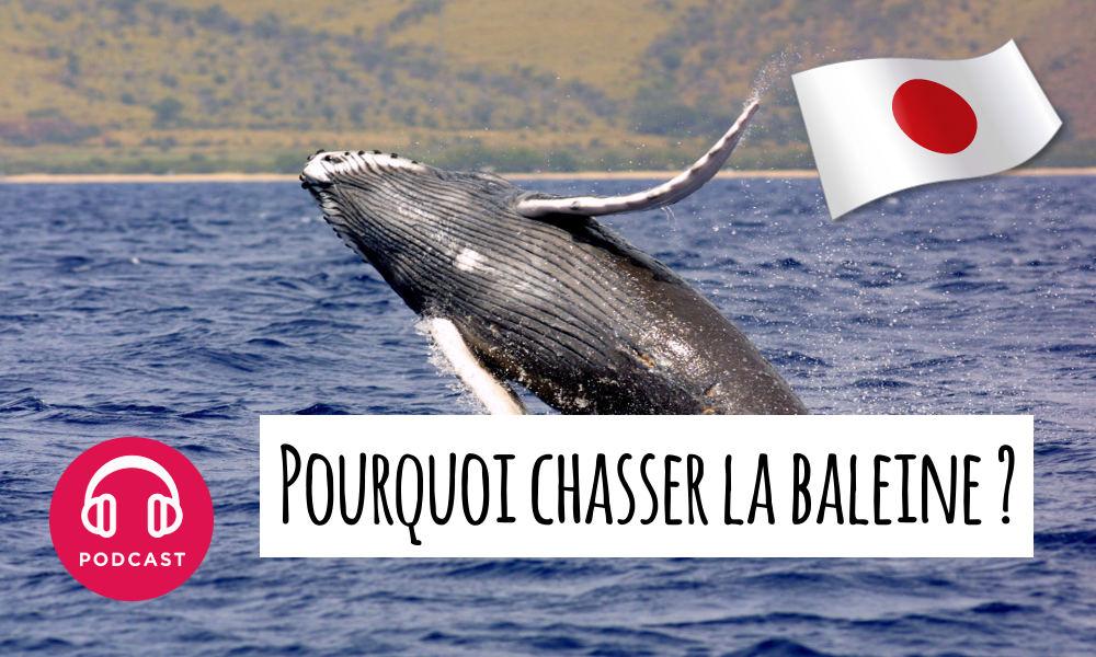 japon chasse baleine