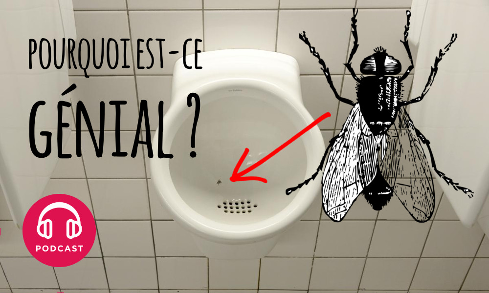 Pourquoi l id e des fausses mouches dans les urinoirs - Invasion de mouches pourquoi ...