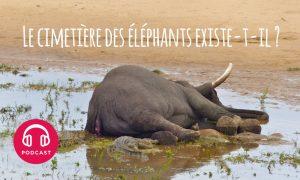 cimetiere elephants