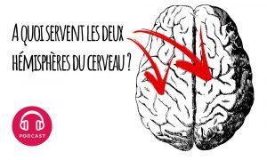 hemisphere cerveau