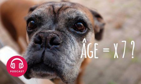 age des chiens
