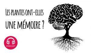 plante memoire